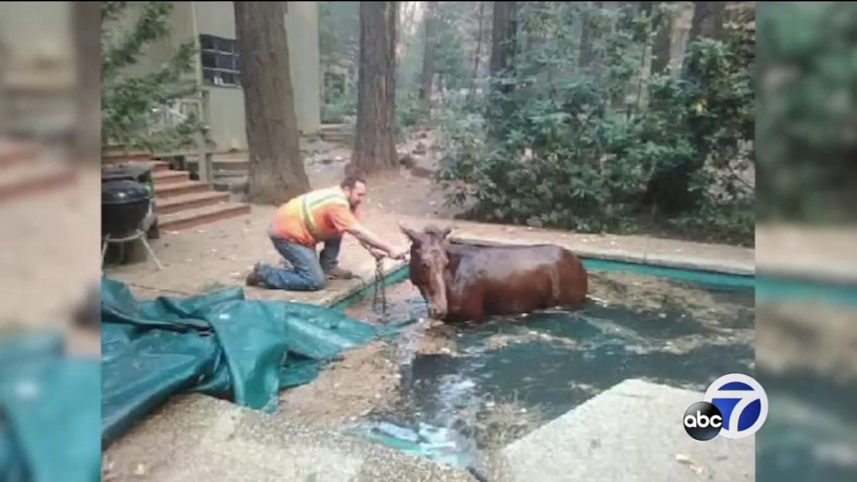 Horse survives Camp Fire in California thanks to backyard swimming pool
